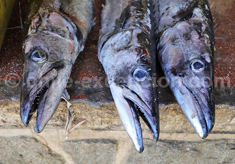 Pêche à Zapallar, Chili
