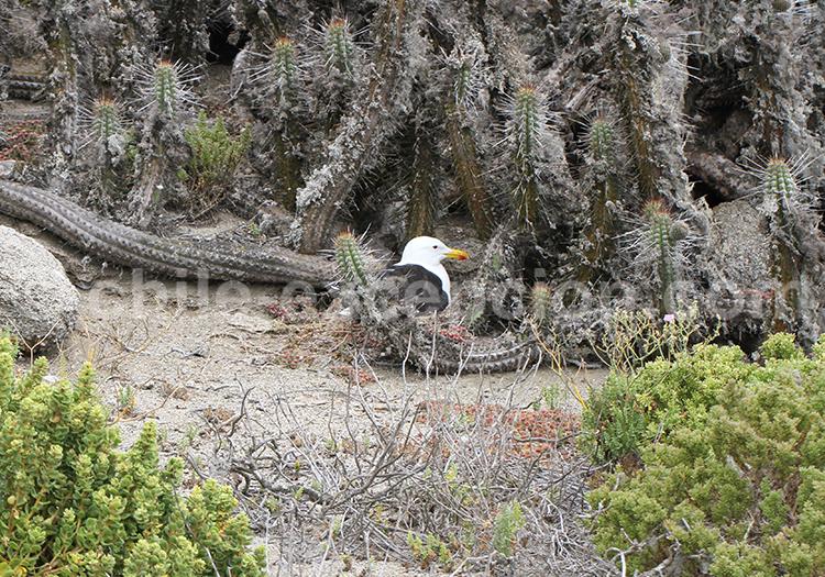 Réserve nationale Pinguino de Humbolt