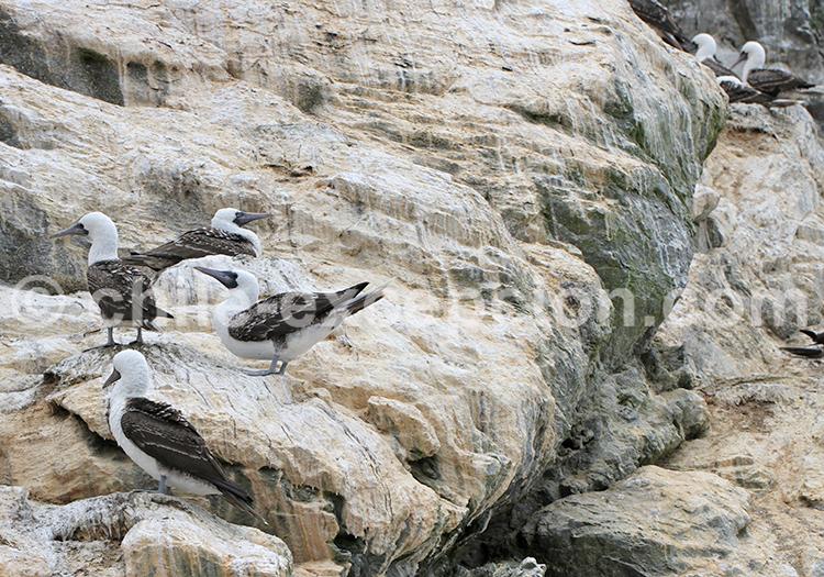 Réserve nationale Pinguino de Humbolt, Nord du Chili