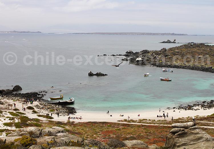 Excursion nautique dans le Nord du Chili