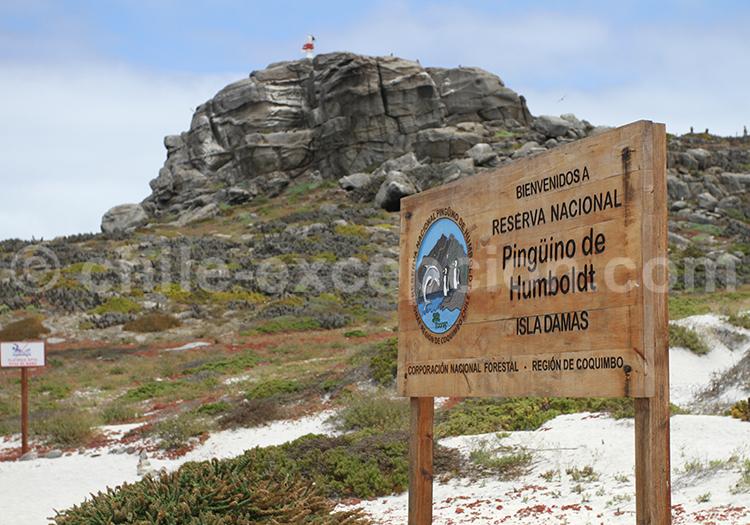 Réserve nationale Pinguino de Humbolt, région de Coquimbo, Chili