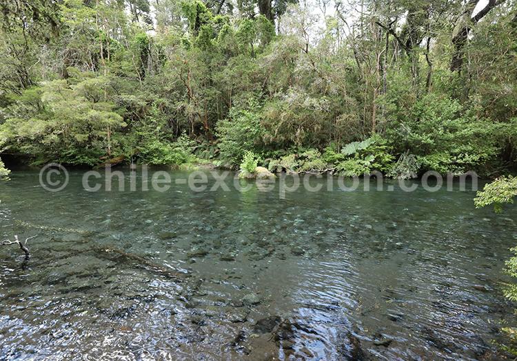 Parc Vicente Perez Rosales, région des lacs et volcans