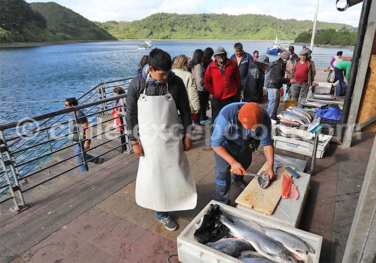 Criée, marché aux poissons d'Angelmó, Chili