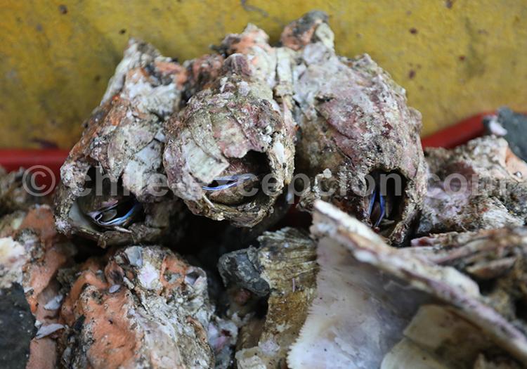 Picorocos, Mercado de Angelmó