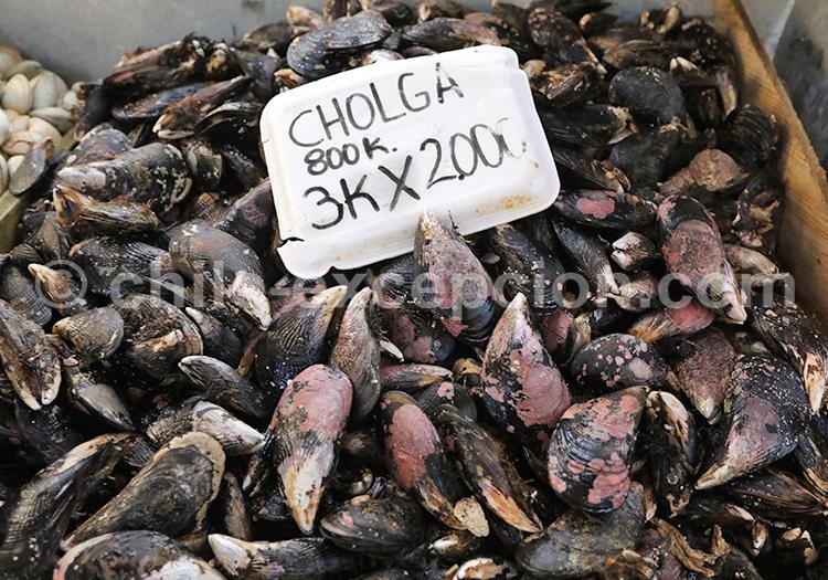 Cholga, Angelmó, Chile