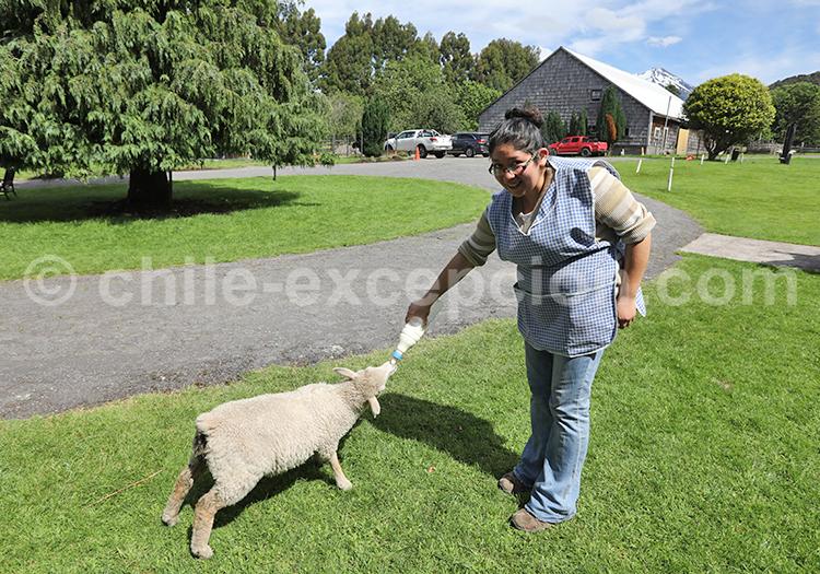 Campesinos de la patagonia, Chile