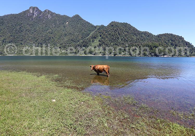 Lac Chapo, parc national Alerce Andino, Chili
