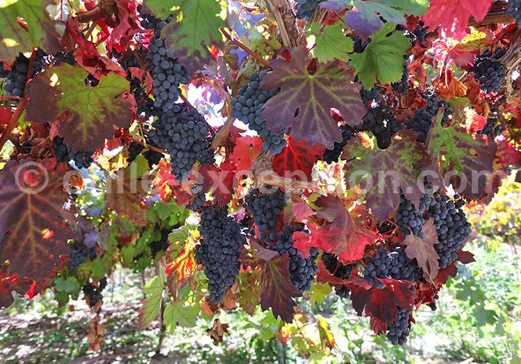 Vignoble, Vallée de l'Elqui
