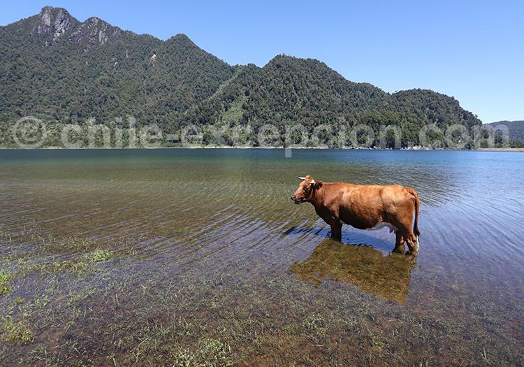 Les plus beaux parcs du Chili