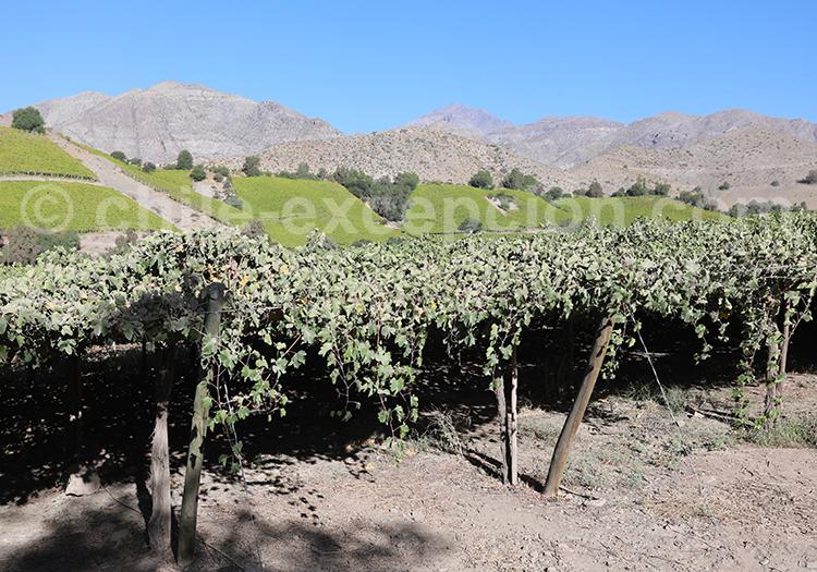 Visite de vignobles, Vallée de l'Elqui,excursions au Chili
