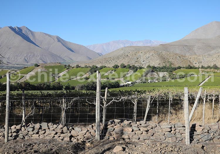 Vignobles de carmenere, Vallée de l'Elqui