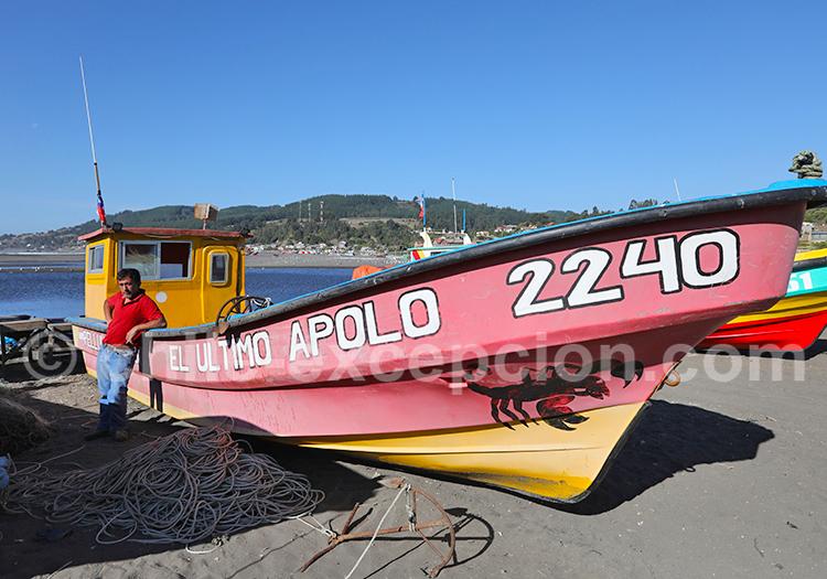 Bateaux de pêche du Chili