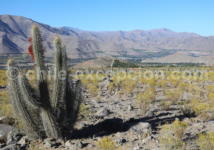 Valle del Elqui, vallée dans le Nord du Chili