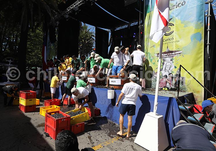 Activités durant les vendanges de Curicó, Chili