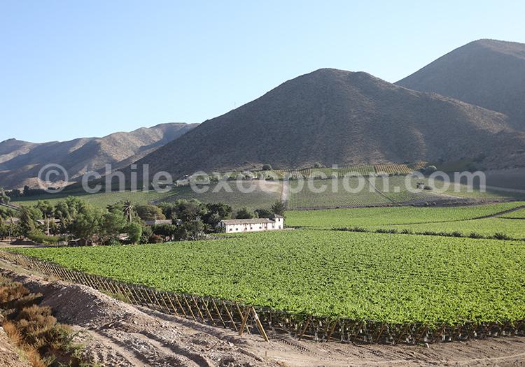 Village de Vicuña, zone de vignobles