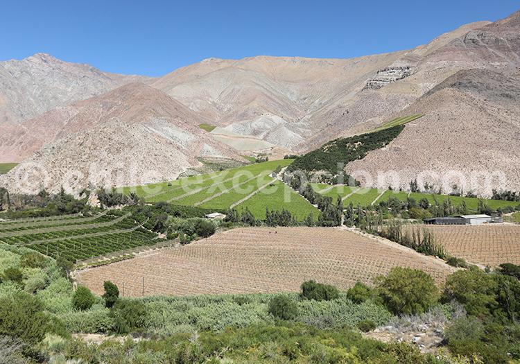 Culture de la vigne, Chile