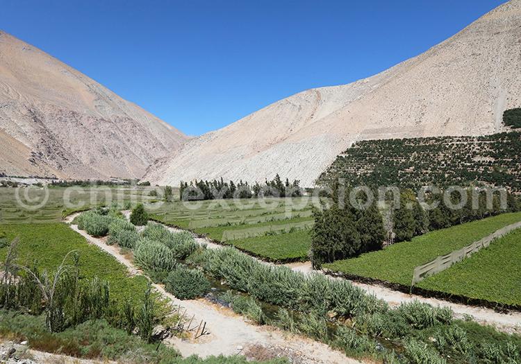 Culture de la vigne, Valle del Elqui, Chile