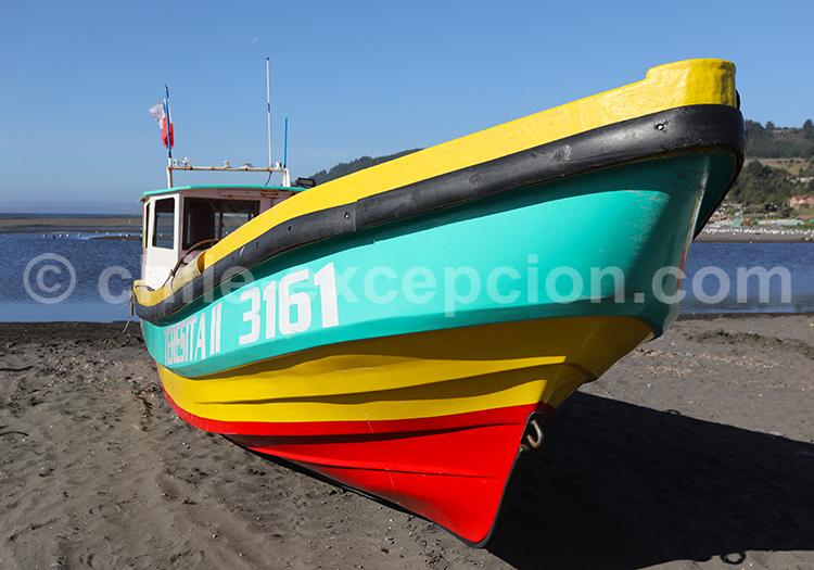 Circuit autotour Curanipe, Chili
