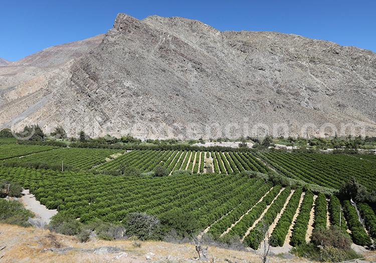Valle del Elqui, Gabriela Mistral, Chile
