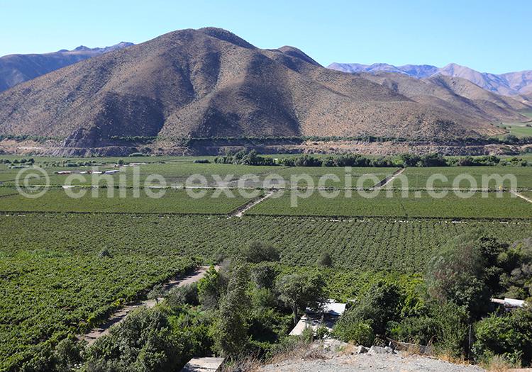 Valle del Elqui, La Serena, Chile