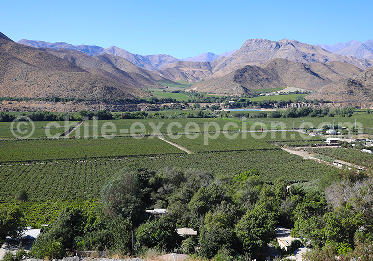 Prairie Elqui Chile
