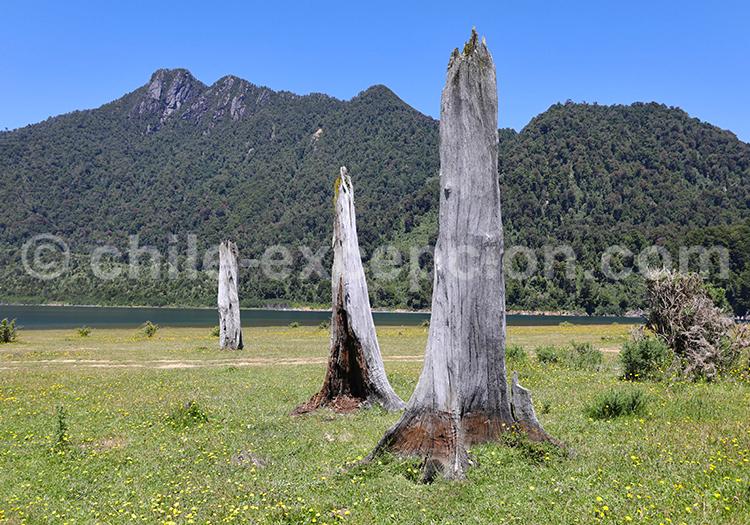 Lac Chapo, Sud du Chili