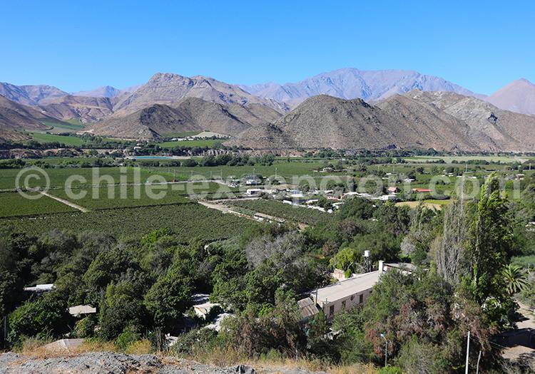 Route du pisco, Valle del Elqui, Chile