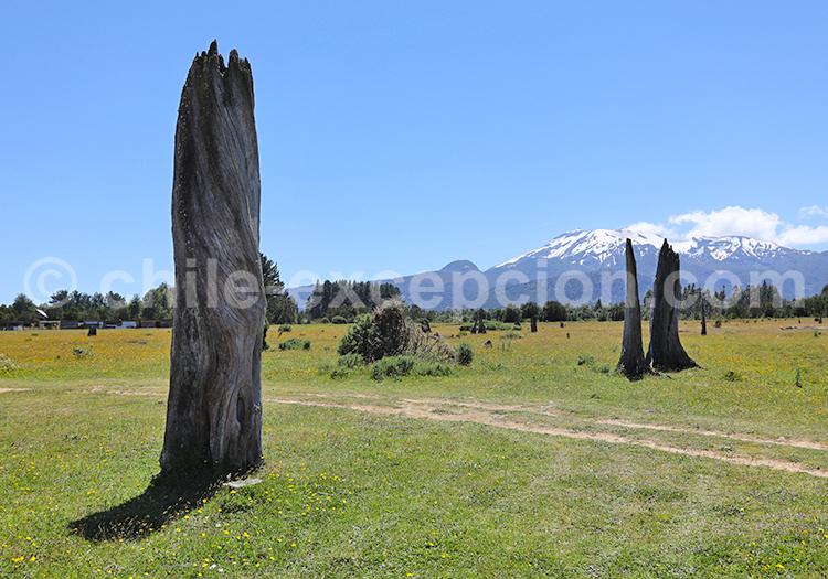 Excursion en pleine nature, Sud du Chili