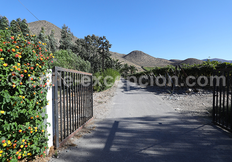 Visite de vignoble, Valle del Elqui, Chile