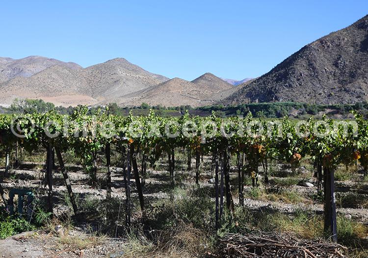 Tour des vins, Vallée de l'Elqui