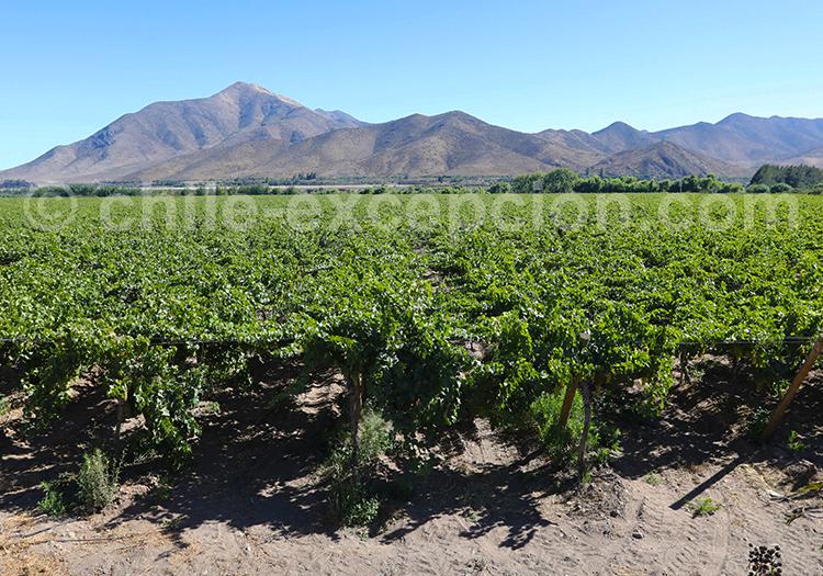Visite des vignobles El Molle, Vallée de l'Elqui
