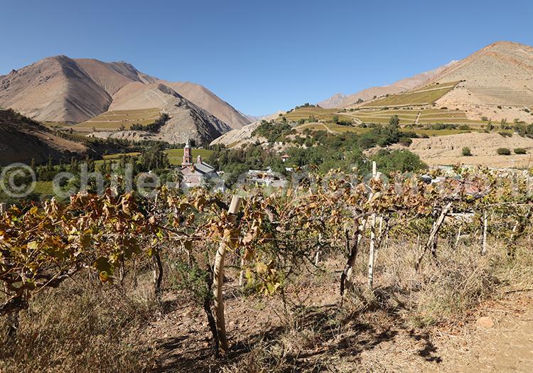 Vignobles du village de Monte Grande