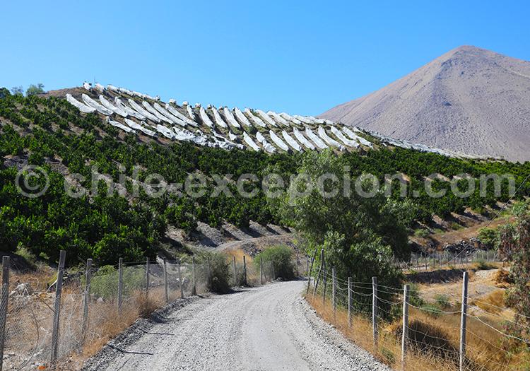 Diaguitas, pueblo de Chile