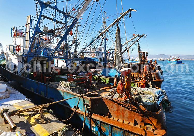 Visite d'un port de pêche, Nord du Chili
