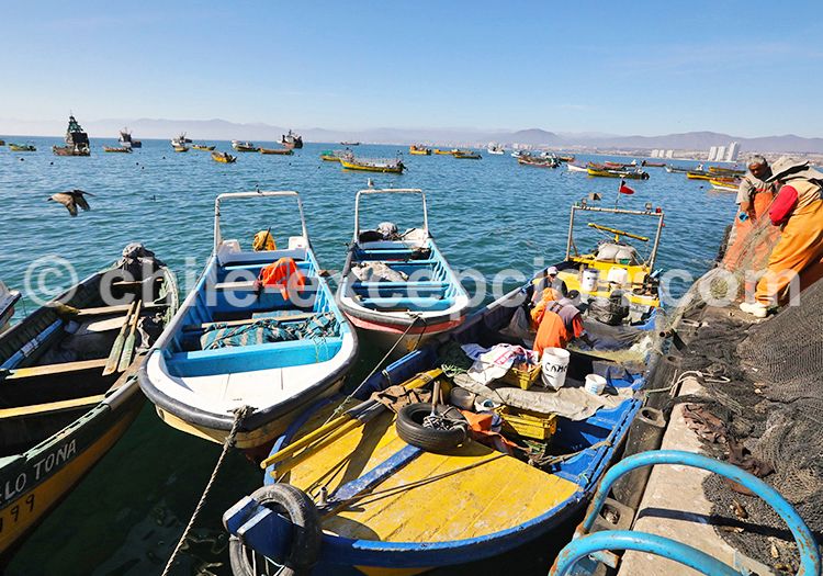 Visite d'un port de pêche, Coquimbo, Chile