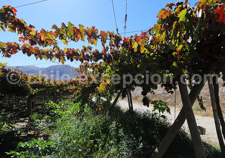 Viñas El Molle, Vallée de l'Elqui
