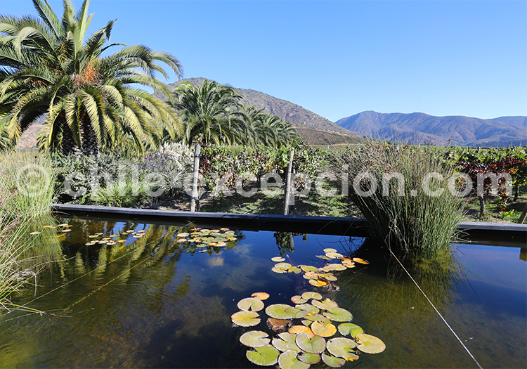 Bodega Viña Veramonte, Chili