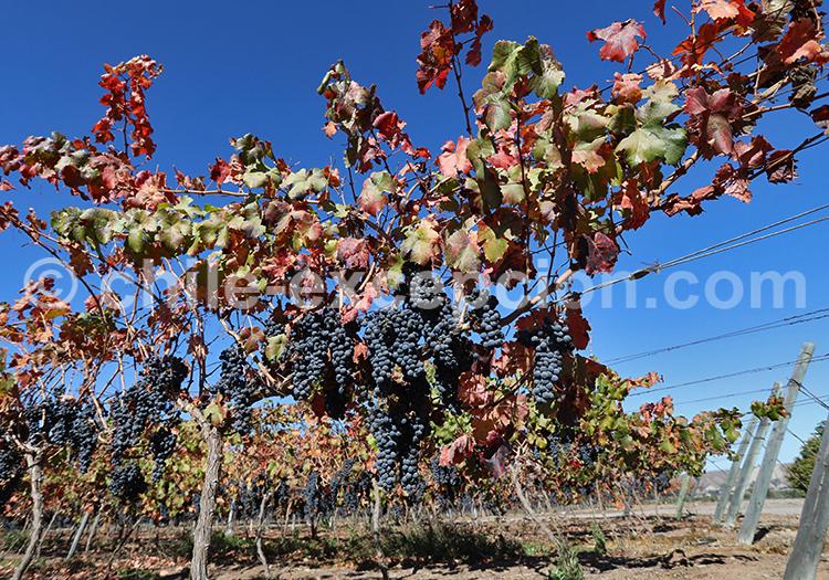 Vignobles Ovalle, Chili