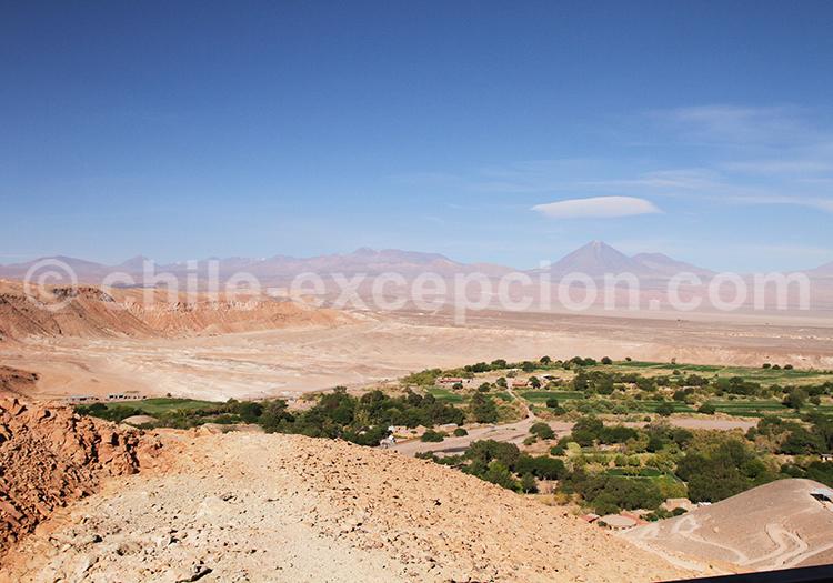 Catarpe, San Pedro de Atacama