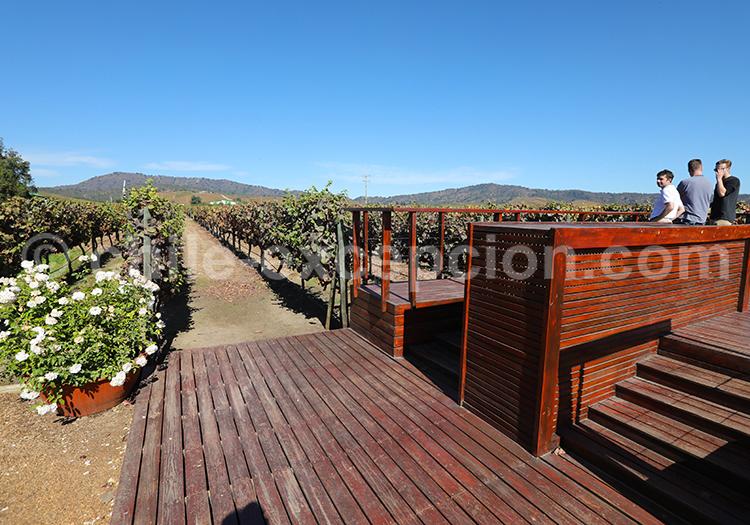 Bodega Casas del Bosque, Chili