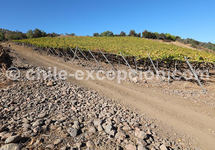 Route du vin, Ovalle, Chili