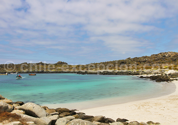 île Damas