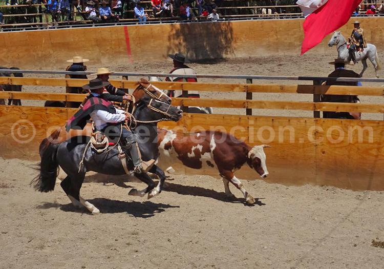 Huasos, Fiesta de Pichasca, Norte de Chile