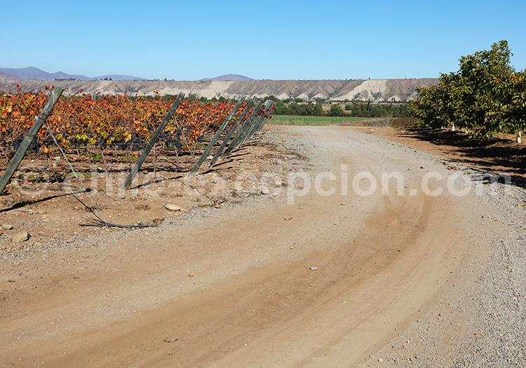 Viña OchoTierras, Chili