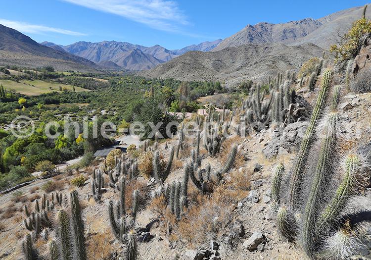 Vallée Río Hurtado, Ovalle