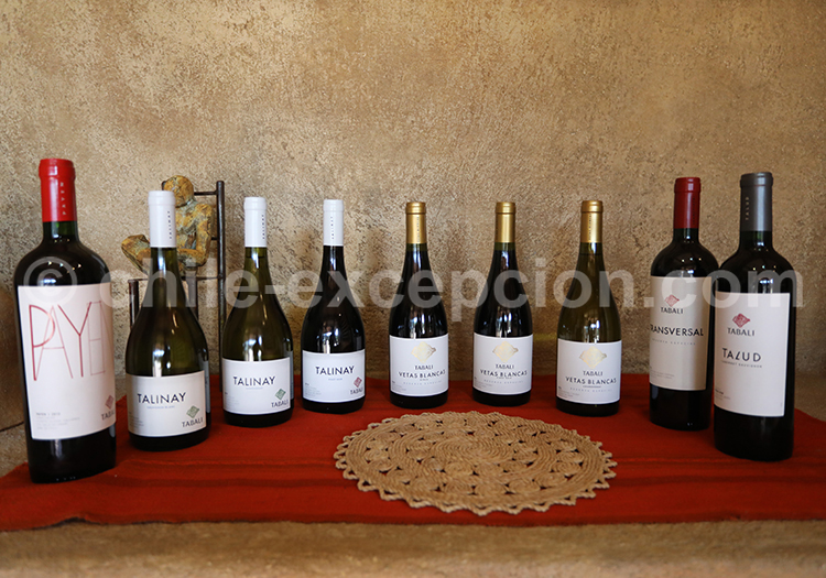 Dégustation de vins, Viña Tabali, Chili