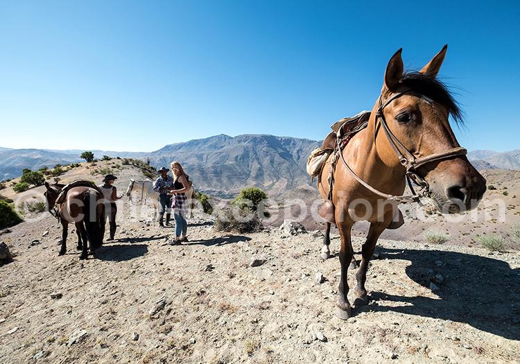 Caminata à cheval Hacienda los Andes, Ovalle