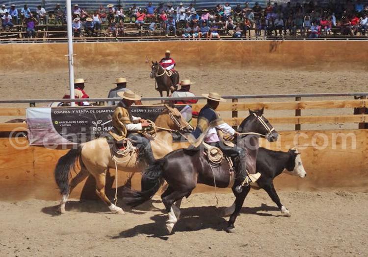 Fiesta de Pichasca, Ovalle