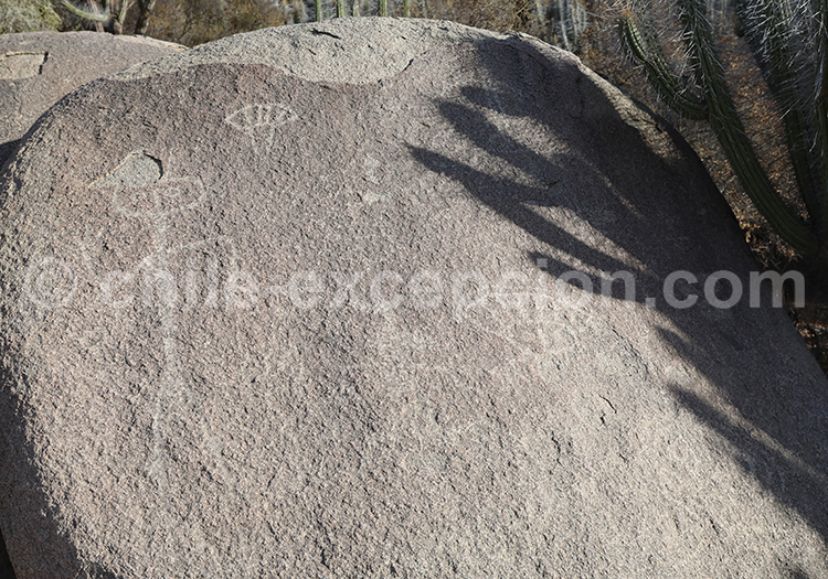 Pétroglyphes, Ovalle