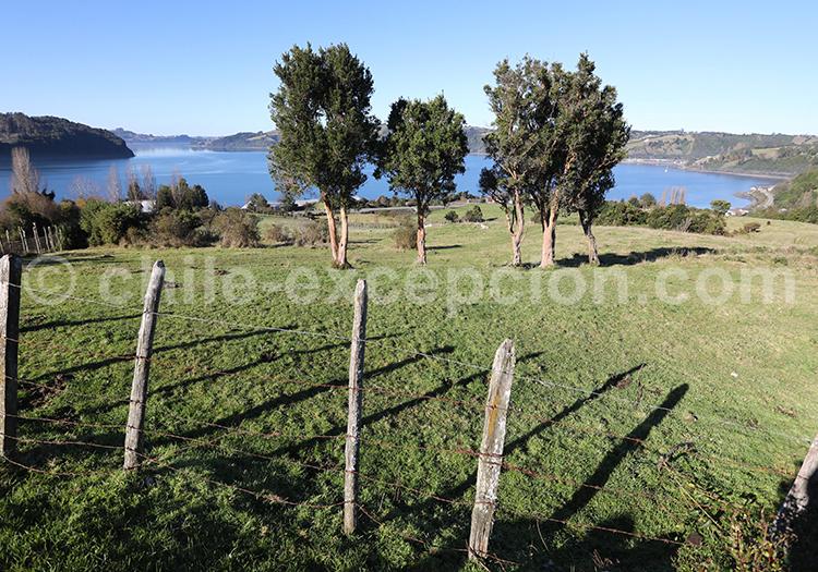 Grande île de Chiloé, Chili